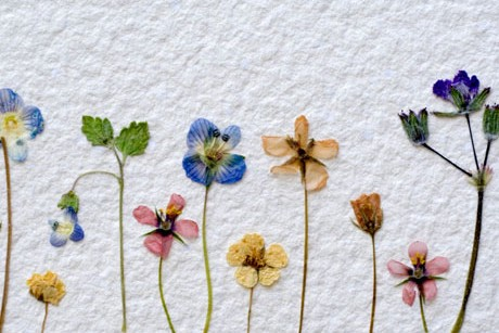 nwf-pressed-flowers-lg-e1342539968573