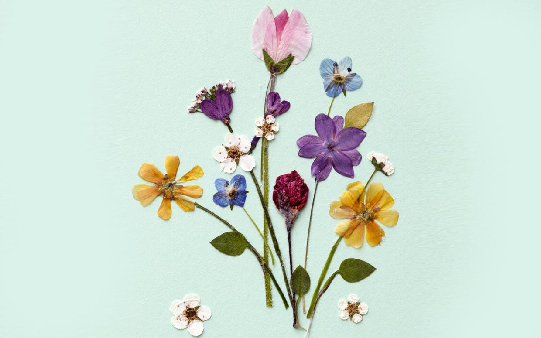pressed-flowers-ftr 2
