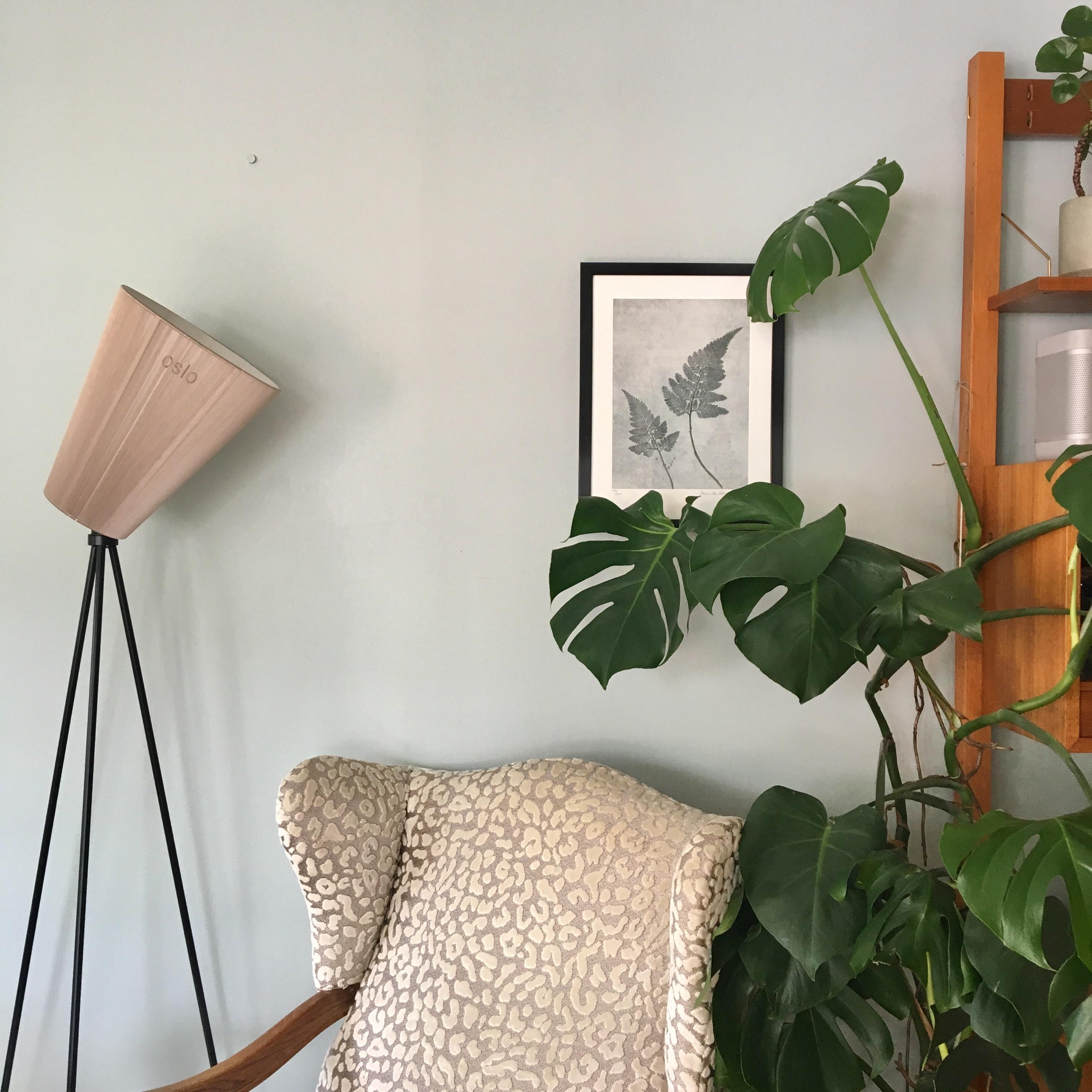 interiør signe, interiørstyling bergen, interiørkonsulent bergen,lys påvirker fargene, redesign, nordsjø farge,Nordsjø maling, resignert signe, monstera, urban jungle, plants, grønne planter, innred med planter, pernille folcarelli, farge på veggen, minty breeze, boligkrise grønt, mal med farge,  asolo sofa bohus, bohus, bohus sofa, retro sofa, vintage møbler, vintage teak møbler, vintage seksjon, innred med hjertet, finn roen i interiøret, innred med planter, innredningshjelp bergen, vindusdekorasjon bergen, innred med rammer, valg av maling, fresh opp med maling